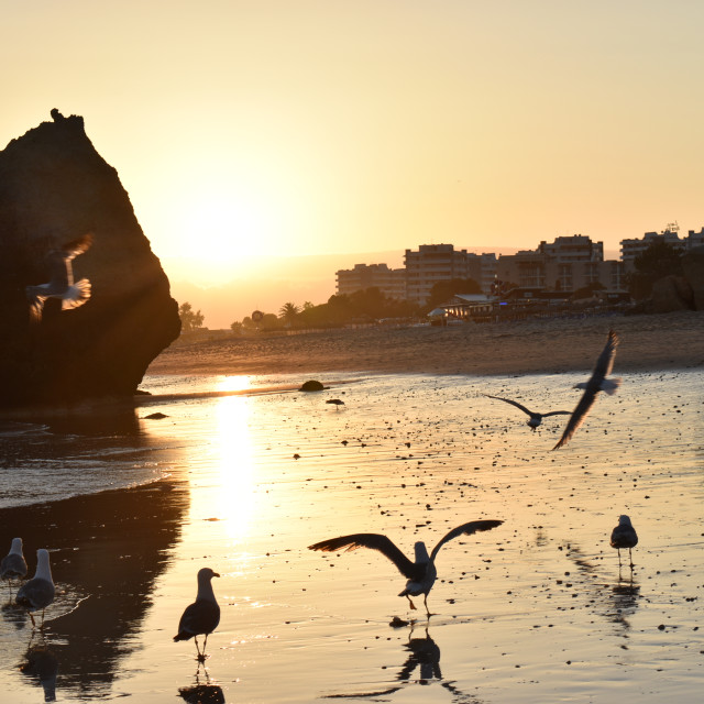 """Sunset Seagulls on the Sand Beach"" stock image"