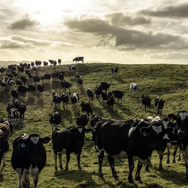 """Rural Farmland"" stock image"
