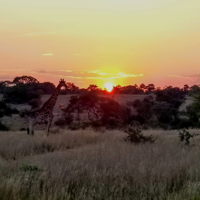 """Sun Set in Zimbabwe"" stock image"