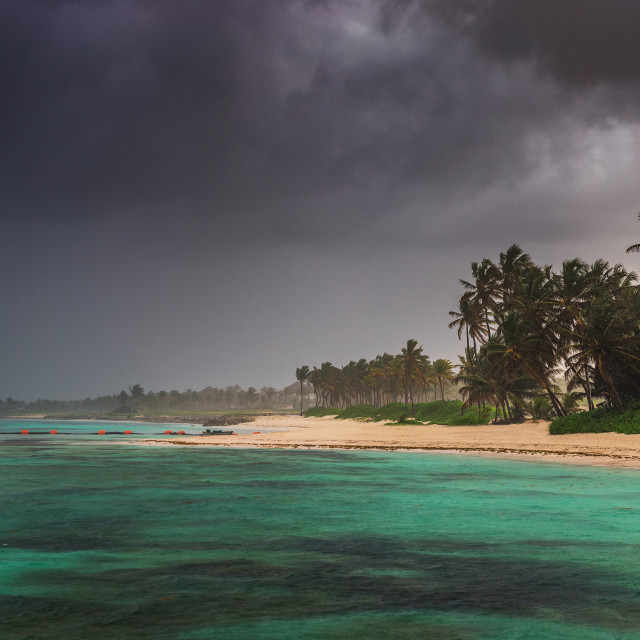 """""""Palm and tropical beach in Punta Cana, Dominican Republic"""" stock image"""