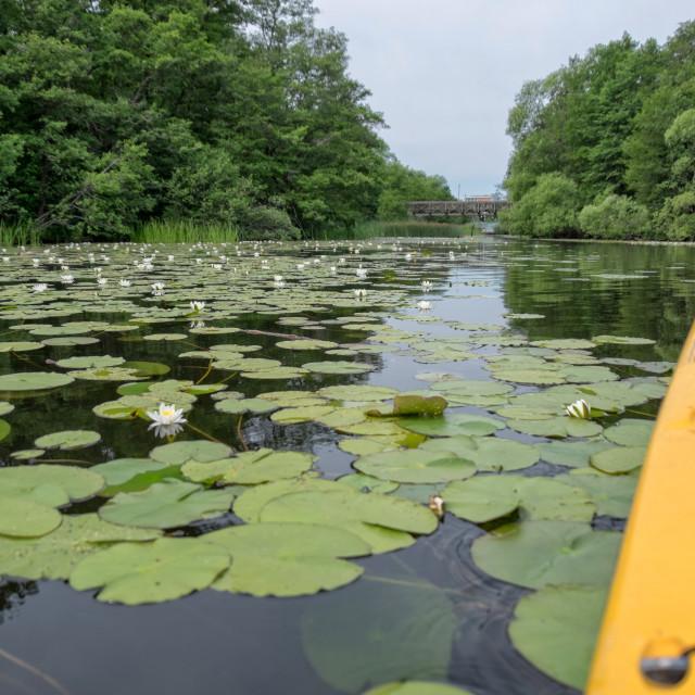 """Peaceful lake"" stock image"