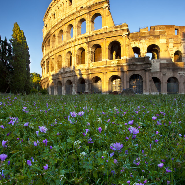 """Field of wildflowers below the Roman Coliseum at sunset, Rome, Lazio Italy"" stock image"