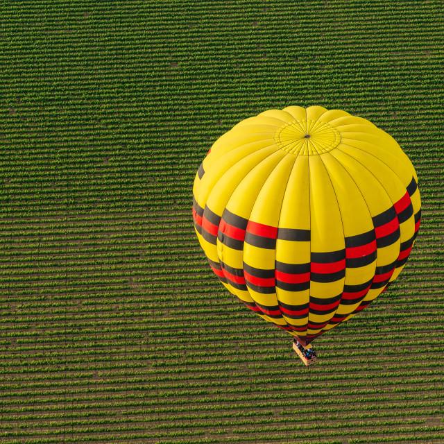 """Hot Air Balloon Drifts Over Napa Valley Vineyards"" stock image"