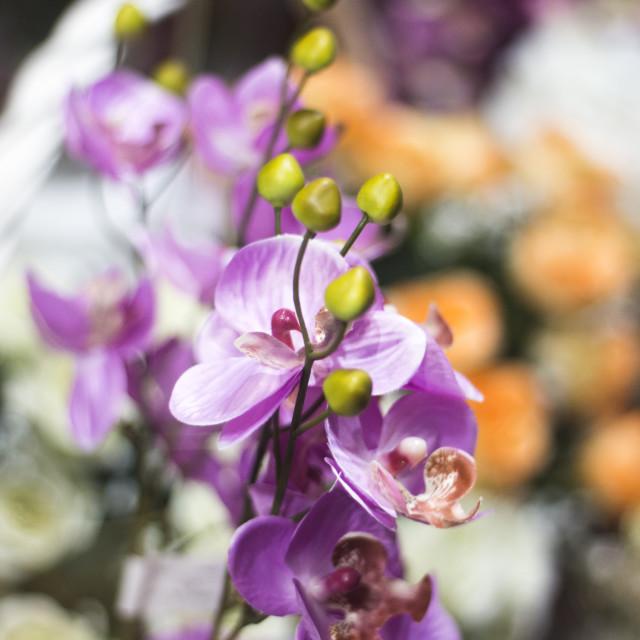 """""""Florists shop flowers bouquet"""" stock image"""