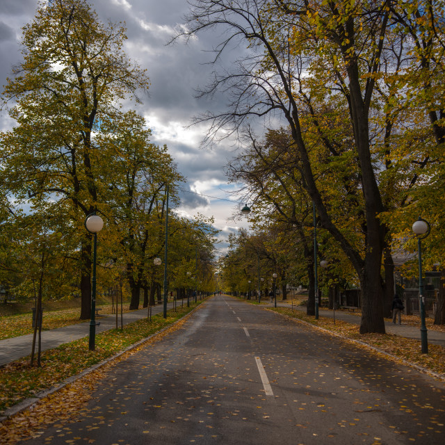 """autumn trees and leafs on street in park"" stock image"