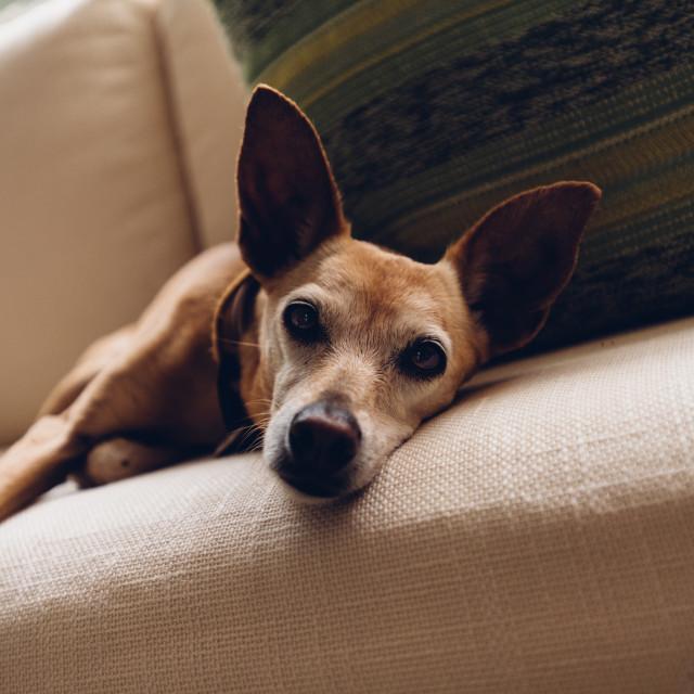 """A dog"" stock image"
