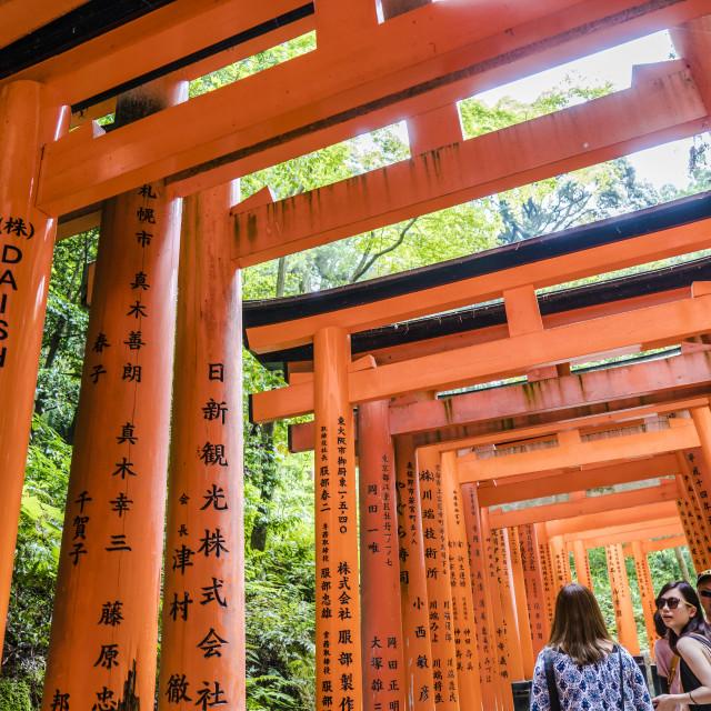 """Torii Gate Avenue"" stock image"