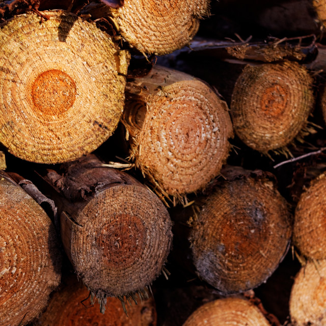 """Logging Industry - Pile of Freshly Chopped Tree Trunks"" stock image"