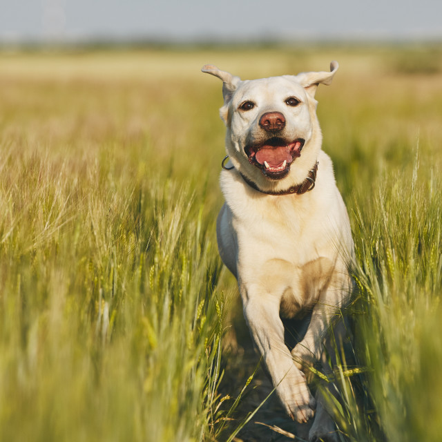 """""""Happy dog in countryside"""" stock image"""