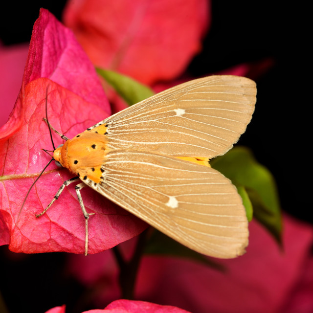 """""""House moth in the garden"""" stock image"""