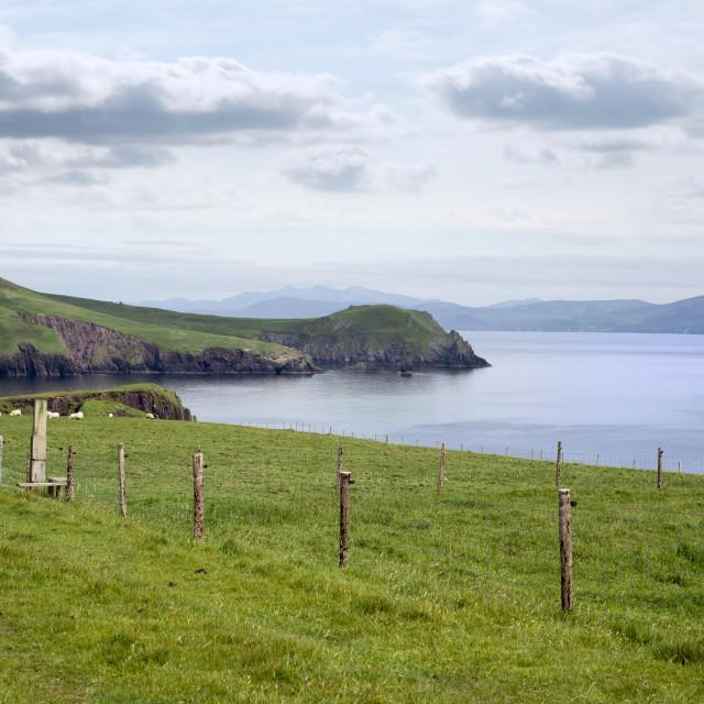 """dingle peninsula and sheep on the wild atlantic way"" stock image"