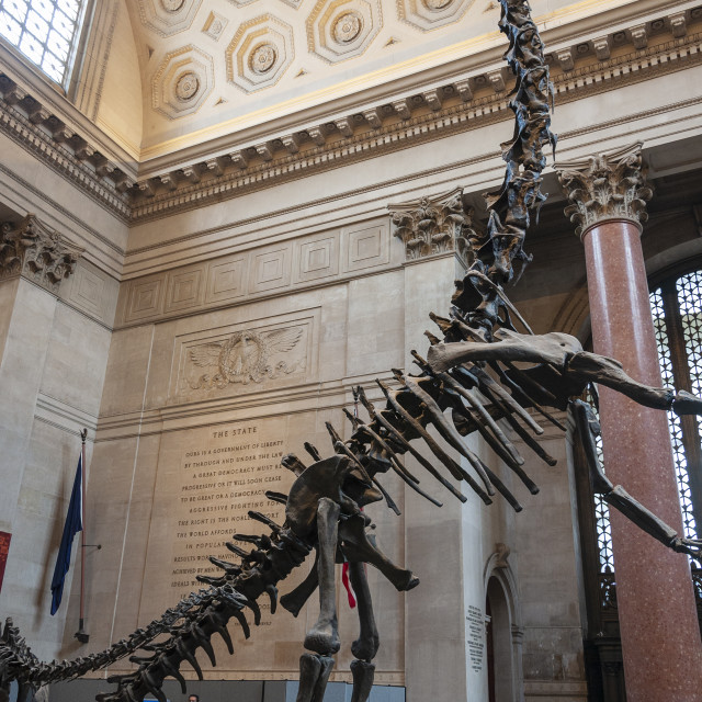 """New York City, USA - June 6, 2010: People at the Theodore Roorevelt Rotunda in the American Museum of Natural History, looking at the Barosaurus skeleton, in New York City, USA."" stock image"