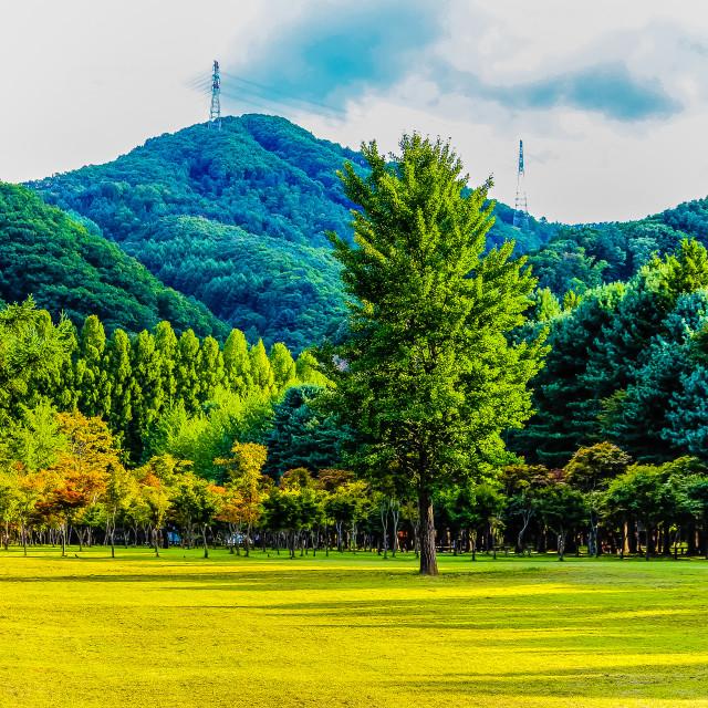 """""""Beautiful Landscape of Nami Isalnd Korea"""" stock image"""