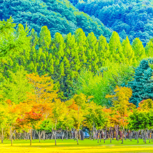 """""""Colorful Forest Park at Nami Island Korea"""" stock image"""