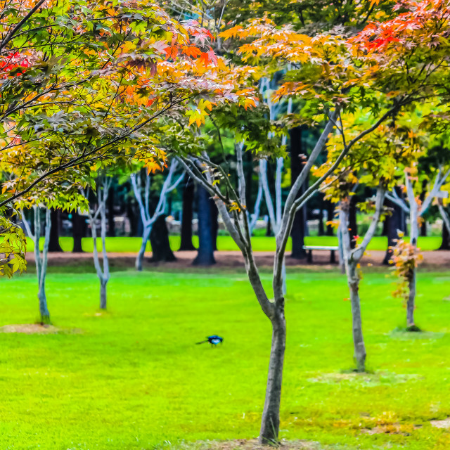 """""""Colorful Forest Park in Nami Isalnd Korea"""" stock image"""