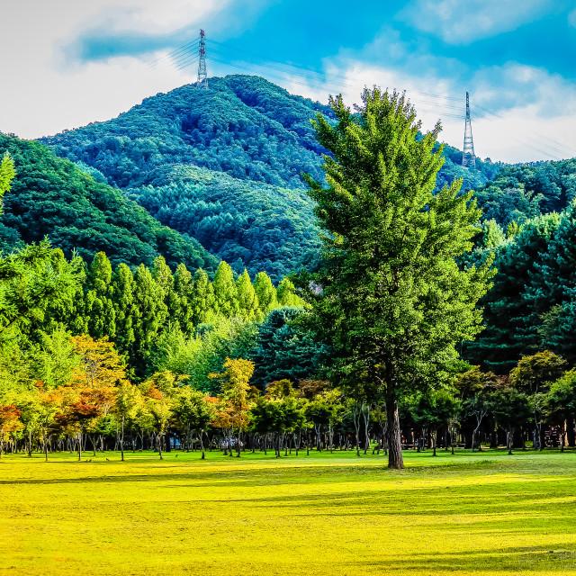 """Colorful Landscape at Nami Island Korea"" stock image"
