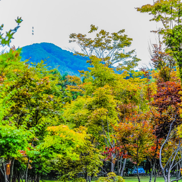 """""""Colourful Forest in Nami Isaland Korea"""" stock image"""
