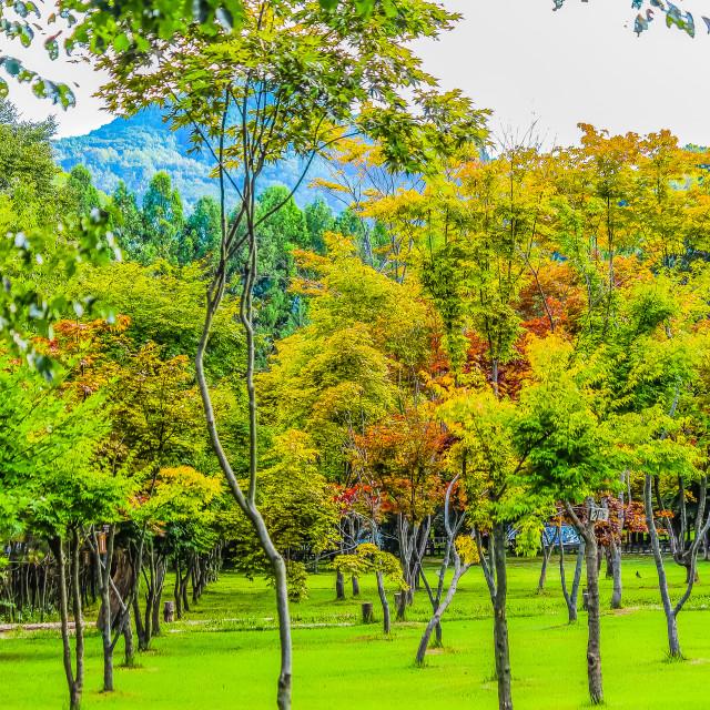 """""""Green Park in Nami Island Korea"""" stock image"""