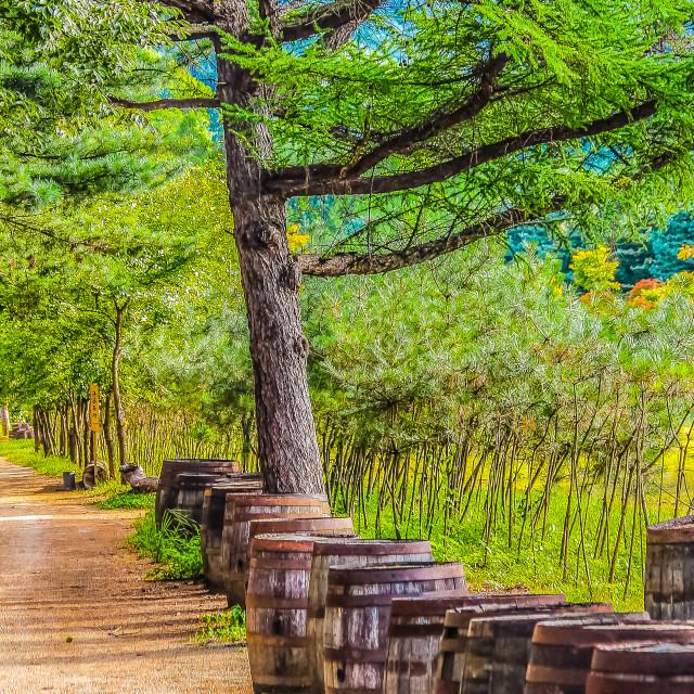 """""""Peaceful Landscape in Nami Island KoreaPeaceful Landscape in Nami Island Korea"""" stock image"""