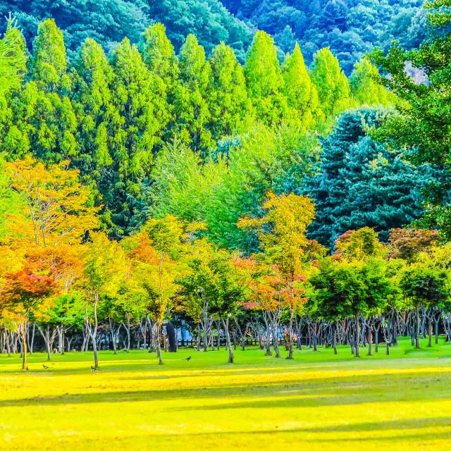 """""""Peaceful Park at Nami Island Korea"""" stock image"""