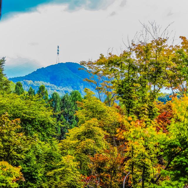 """Perspective Landscape in Nami Isalnd Korea"" stock image"