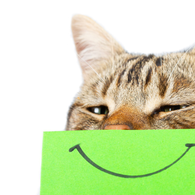 """""""Cat with a smile"""" stock image"""