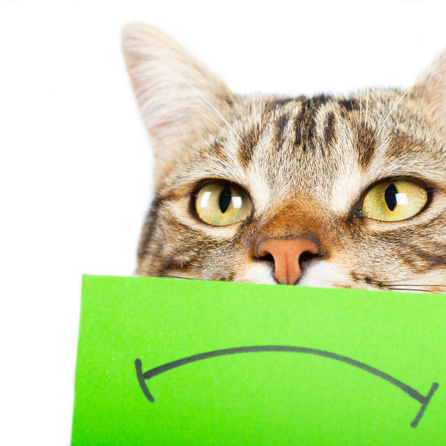"""""""Cat with angry face"""" stock image"""