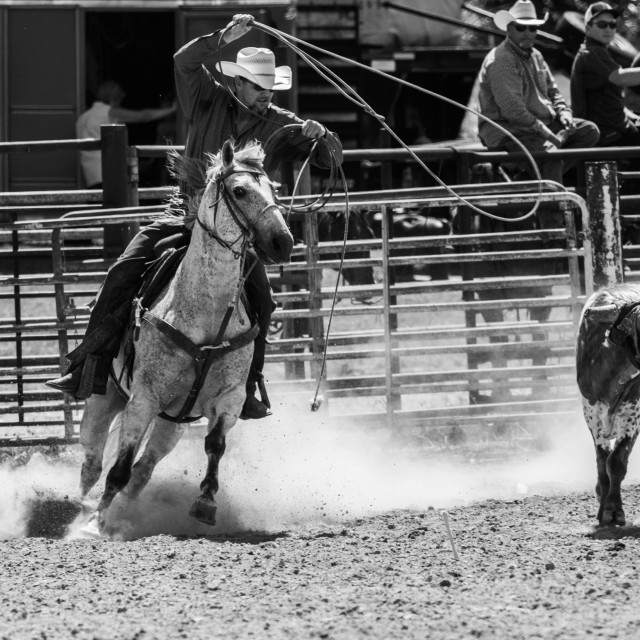 """""""Rodeo roping in Black and White"""" stock image"""