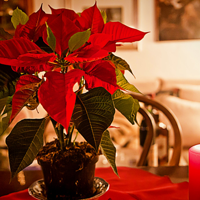 """""""Christmas eve at home, red decor on the table"""" stock image"""