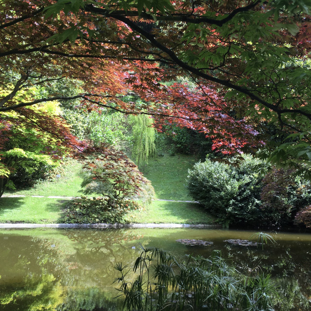 """""""Lake Como Lakeside Garden"""" stock image"""