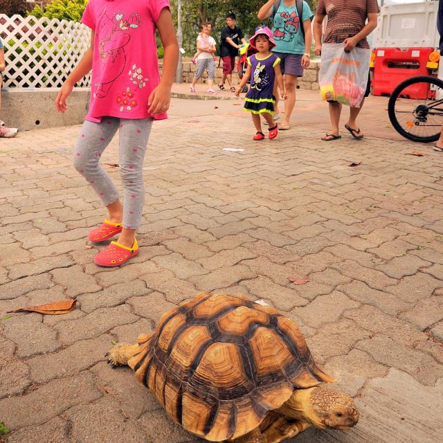 """Little girl and big turtle"" stock image"