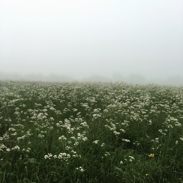 """Misty fields"" stock image"
