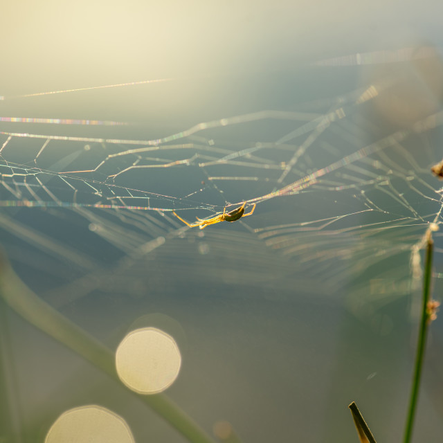"""Morning drops of dew in a spider web."" stock image"