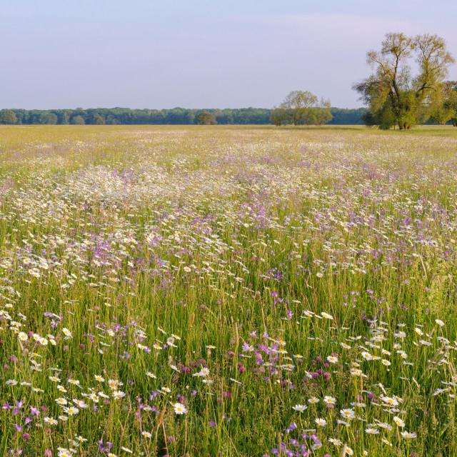"""""""Flower Landscape"""" stock image"""