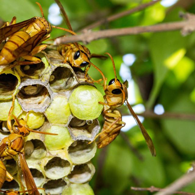 """Wasp Hive"" stock image"