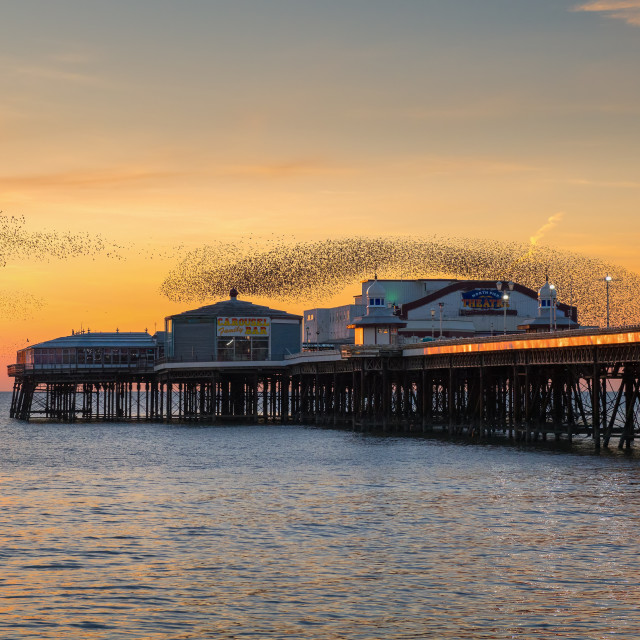 """Starling Murmuration, Blackpool Pier at sunset, England, UK"" stock image"