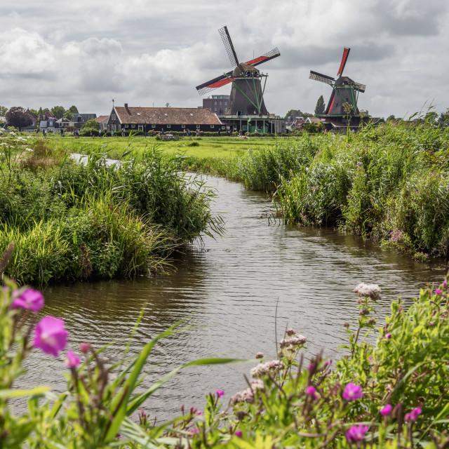 """Windmills in Zaanse Schans, Zaandam, North Holland, The Netherlands"" stock image"