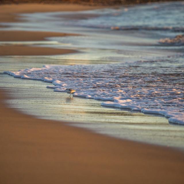 """Little bird on a beach. Sagres, the Algarve, Portugal, Europe."" stock image"
