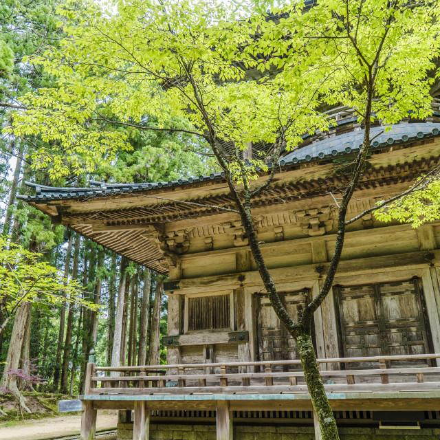 """""""Saito Spring"""" stock image"""