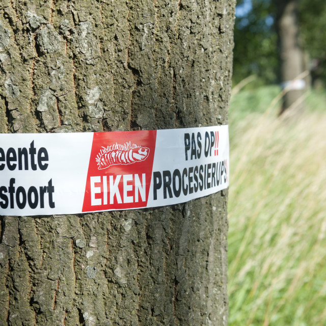 """Nr Amersfoort The Netherlands Warning on oak trees for the oak processionary..."" stock image"