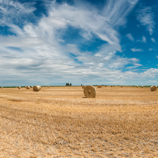"""Harvested wheat fields"" stock image"