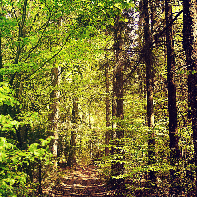 """Bavarian woodland in spring"" stock image"