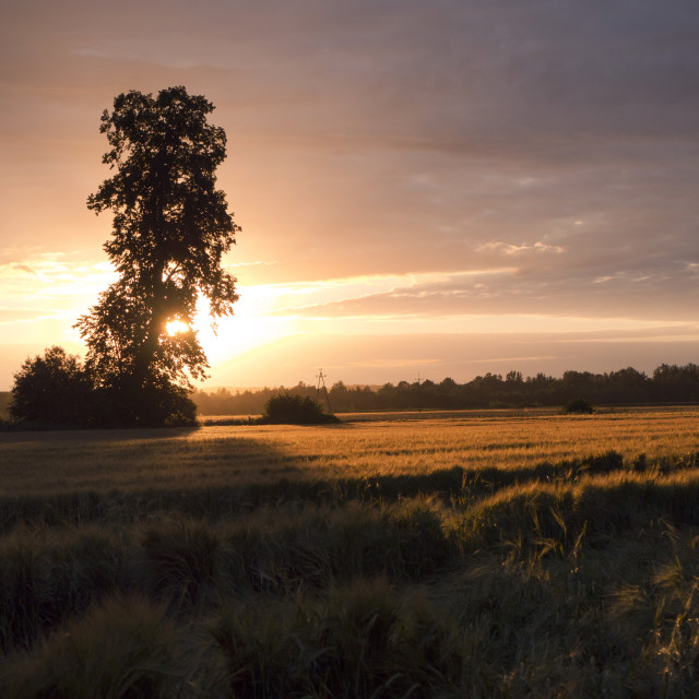 """""""Summer landscape of fields at sunset"""" stock image"""