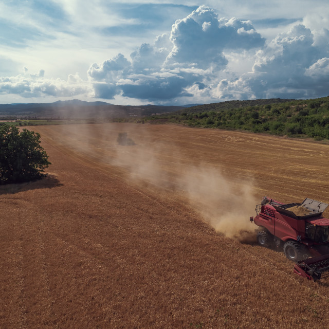 """""""Aerial view on the combine working on the large wheat field"""" stock image"""