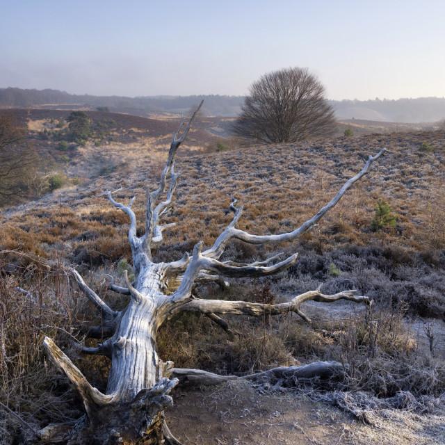"""""""Fallen tree near the Posbank"""" stock image"""