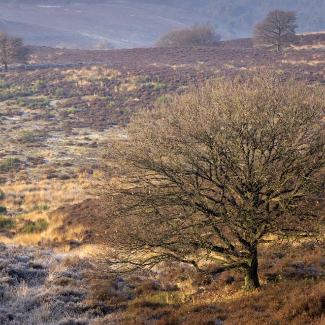 """Riped heathland near the Posbank"" stock image"