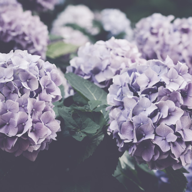 """""""floral theme backdrops"""" stock image"""
