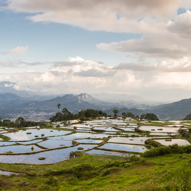 """Rice terraces"" stock image"