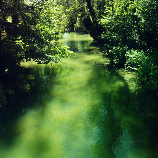 """Green lagoon in woodland"" stock image"