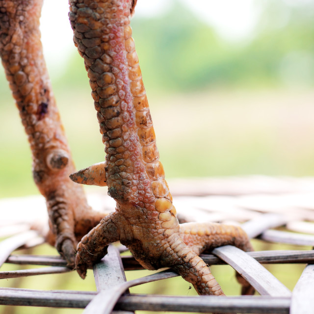 """Legs of gammon in rural."" stock image"